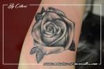 rose noir et gris